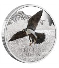 Birds Of Prey Silver Coin - Peregrine Falcon